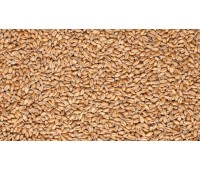 Солод пшеничный Malterie Du Chateau S.A. (Шато Вит) Бельгия